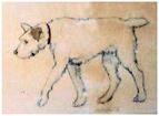 domdog